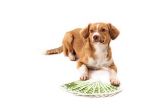 How to increase your dog trainer salary through specialization